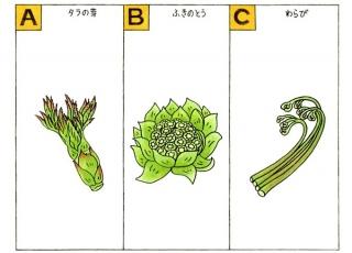 山菜のイラスト