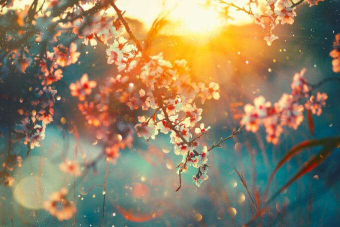 春の桜と太陽