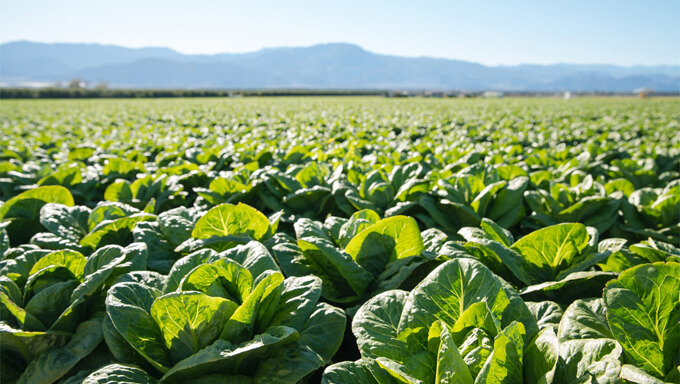[野菜の選び方]無農薬野菜と有機野菜の違いと、見分けポイント