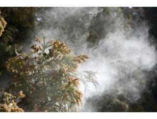 花粉症ってなくならないの? 2050年まではスギ花粉の飛散が続くと予測