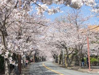 穴場あり!春のお出かけスポット。日帰りでも気軽に楽しめる春の「伊豆高原」