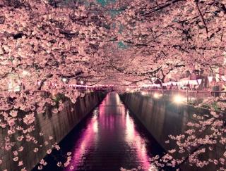 2〜4月生まれの4月は、愛情運が最高。「花見」に行くとLOVE運アップ!