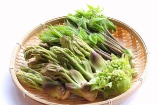春野菜のイメージ