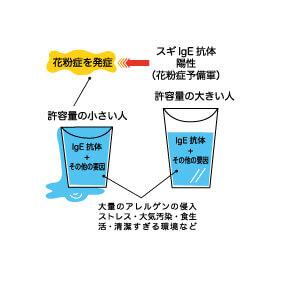 アレルギー発症の仕組み~二つのコップの図