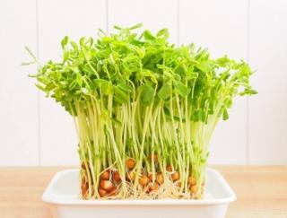 「豆苗」でストレスを乗り切る!? 栄養たっぷりおすすめレシピ2選