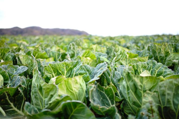 畑の春野菜