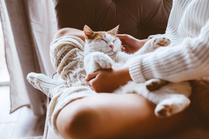 家でゆっくりする猫