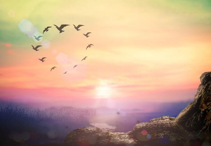 キレイな色の空を鳥が円を描いて飛んでいるイメージ画像