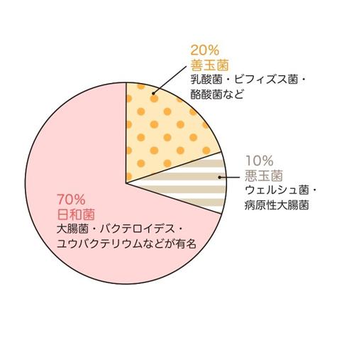 善玉菌、悪玉菌、日和見菌の割合を示したイラスト