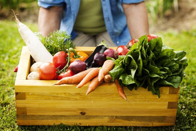 畑で収穫された野菜の画像