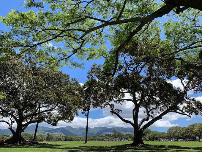 ハワイの木や空など大自然