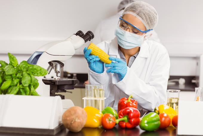 野菜の研究をする研究者の画像