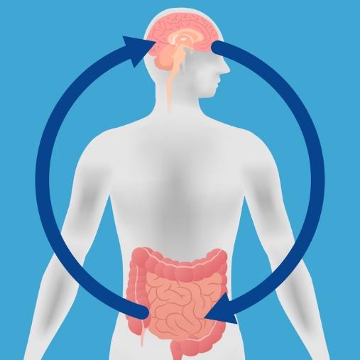 脳腸相関を表したイラスト