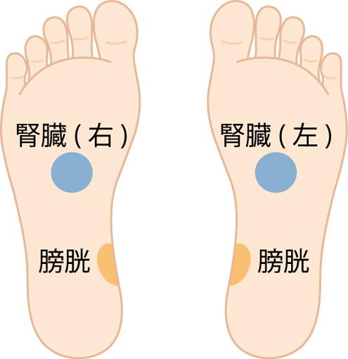 刺激する部位を示す見本(腎臓と膀胱)