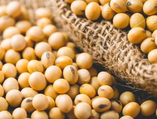 「大豆たんぱく質」がポイント♪ 食べるだけで筋力アップを期待できる大豆パワー!