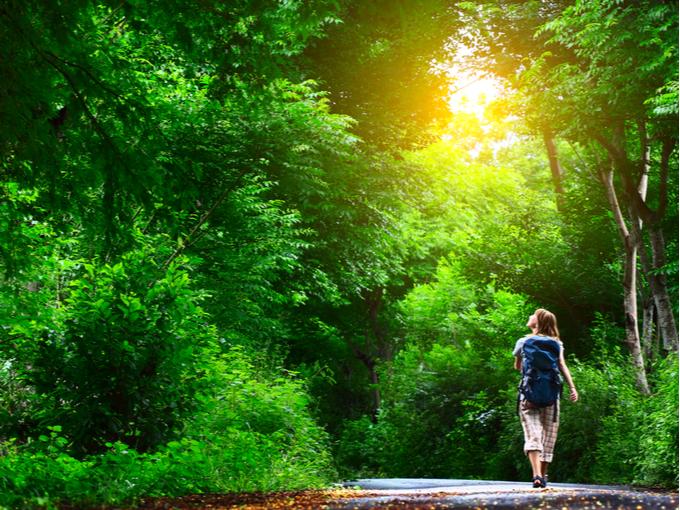 森を散策する人