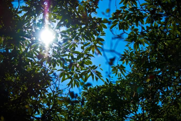 木々の間から太陽が寝る