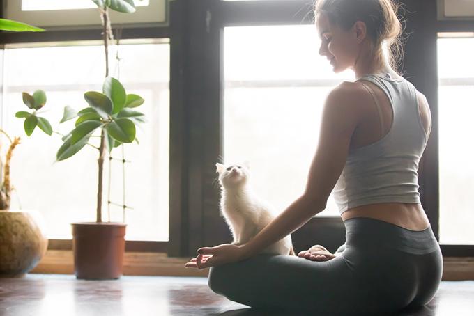 ヨガをする女性とネコ