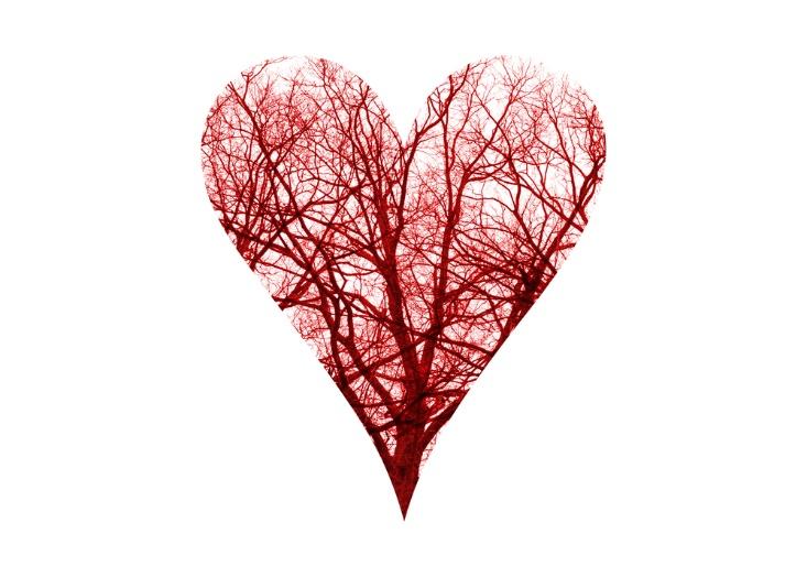 血管がハート形