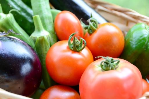 夏野菜の集合