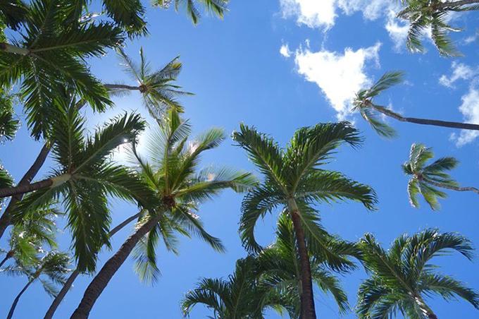 ヤシの木をしたから見た空のイメージ画像