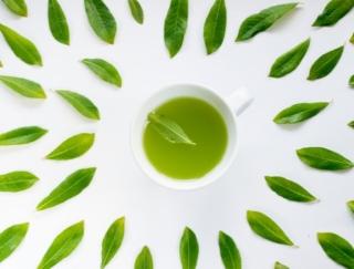 お茶は低温で蒸らすとリラックス成分が増す! 疲労軽減食材「日本茶」と「鶏むね肉」