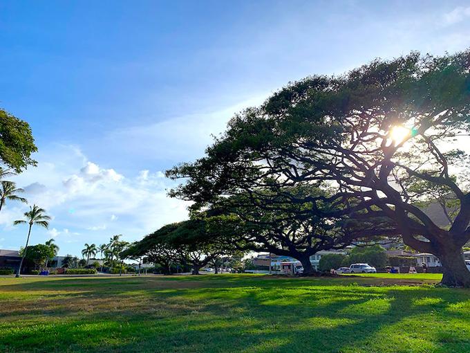 ハワイの自然豊かな広場
