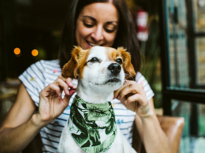 ペットの犬にバンダナをつける女性