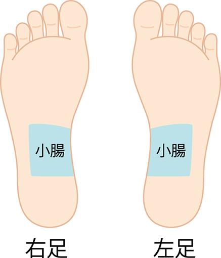 足裏の小腸のゾーン