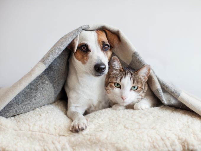 毛布をかぶったペットの犬と猫