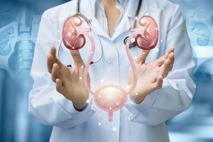 医師が膀胱について解説