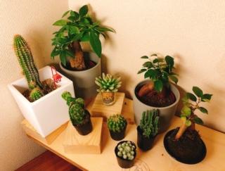 癒し効果絶大! 観葉植物でお部屋にグリーン空間を♡ #Omezaトーク