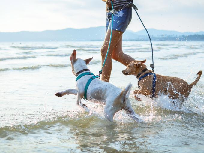 波打ち際で飼い主についていく犬