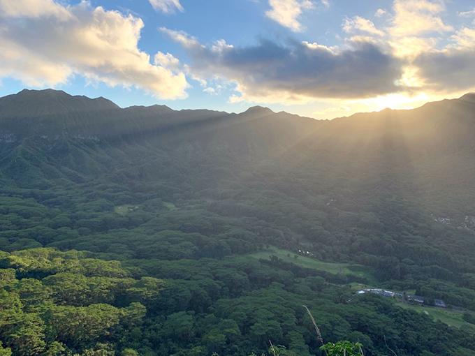 ハワイの森一面