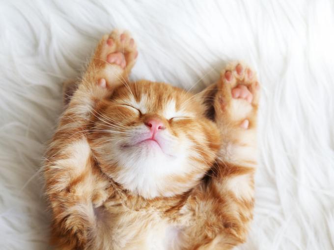 伸びをして、眠そうな猫