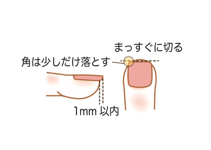 爪の切り方のイラスト