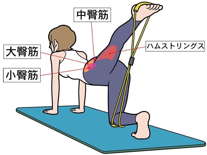 鍛える筋肉