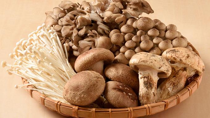 [きのこの栄養]乾燥と生で7倍違う成分も!きのこの種類別栄養