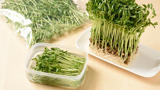 豆苗は冷蔵も冷凍もOK!鮮度を保つ保存のコツと選び方