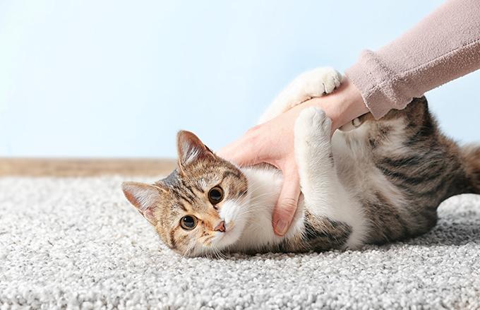 撫でられるネコ