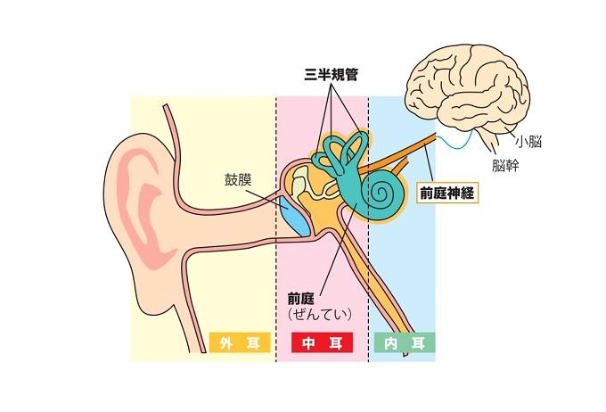 耳イラスト画像