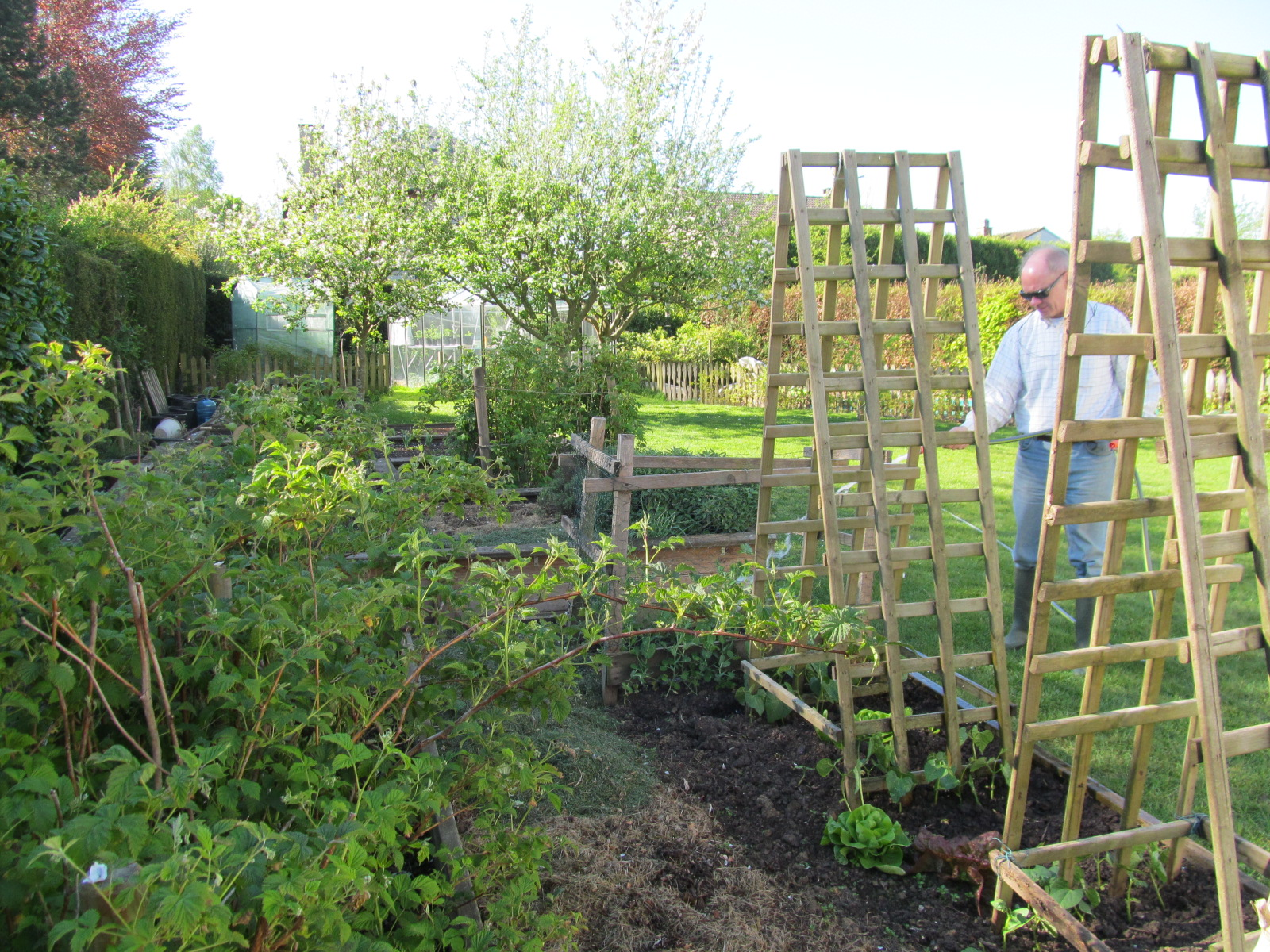 お庭のたくさんの苗