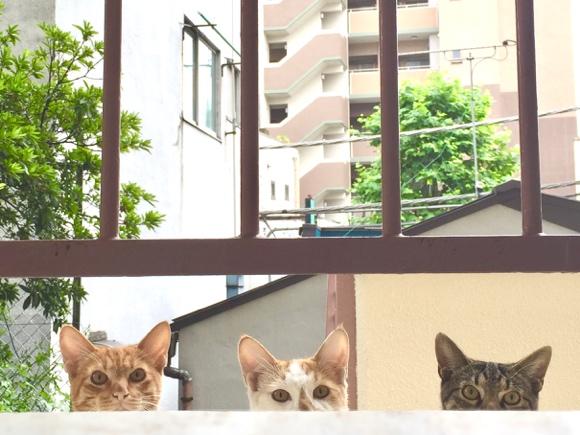 「視線を感じる…」家をのぞいてくるノラ猫たちがかわいすぎる!