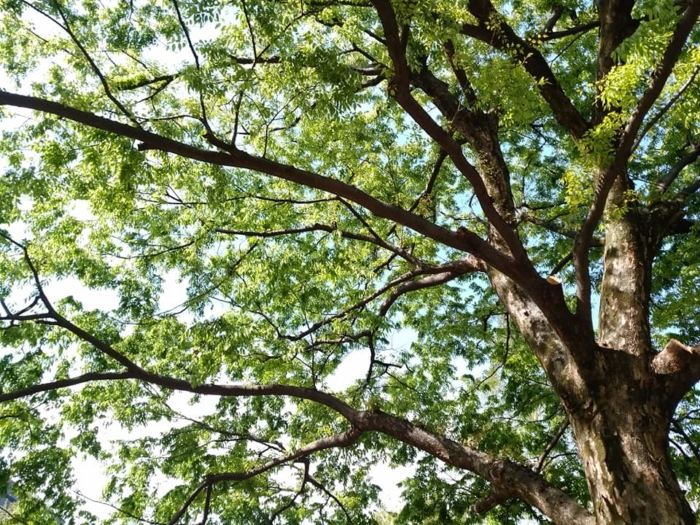 グリーンのキレイな木