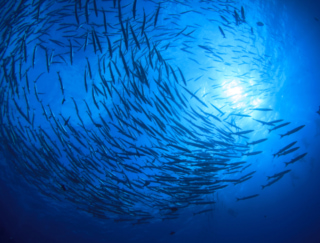 サプリメントでも死亡リスクを下げられる!?  EPA・DHAなど魚の油がもつチカラとは