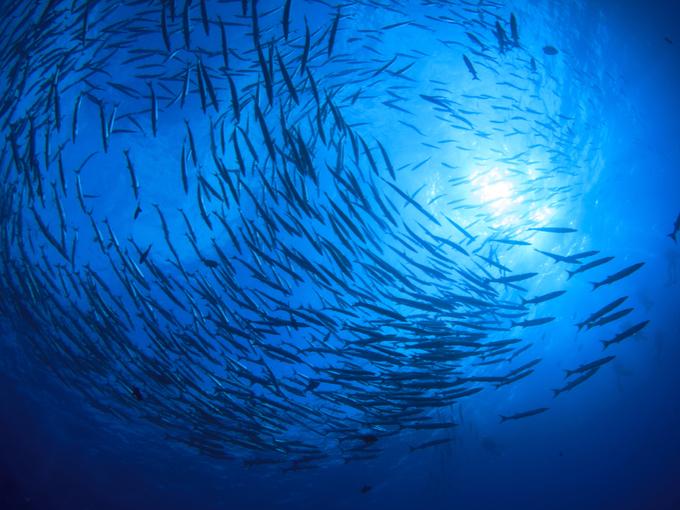 水中を泳ぐ魚の群れ