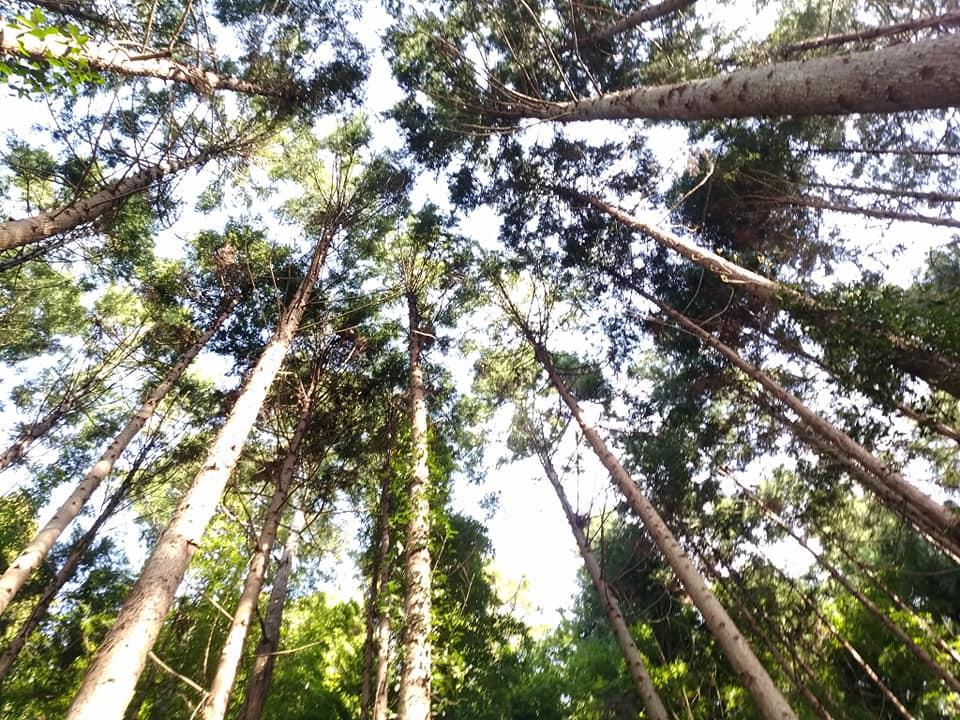 樹木を下から撮影した写真