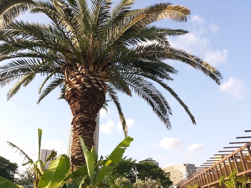 都会の中の南国をイメージさせる木の写真