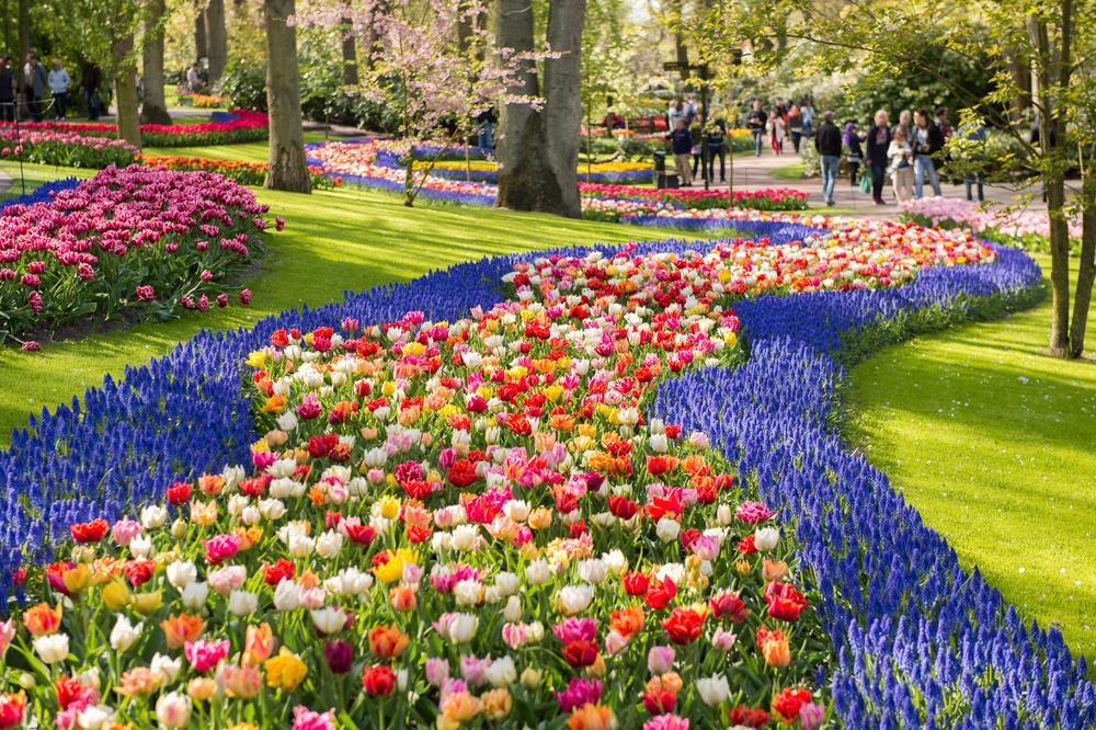 オランダが誇るキューケンホフ公園のチューリップ畑