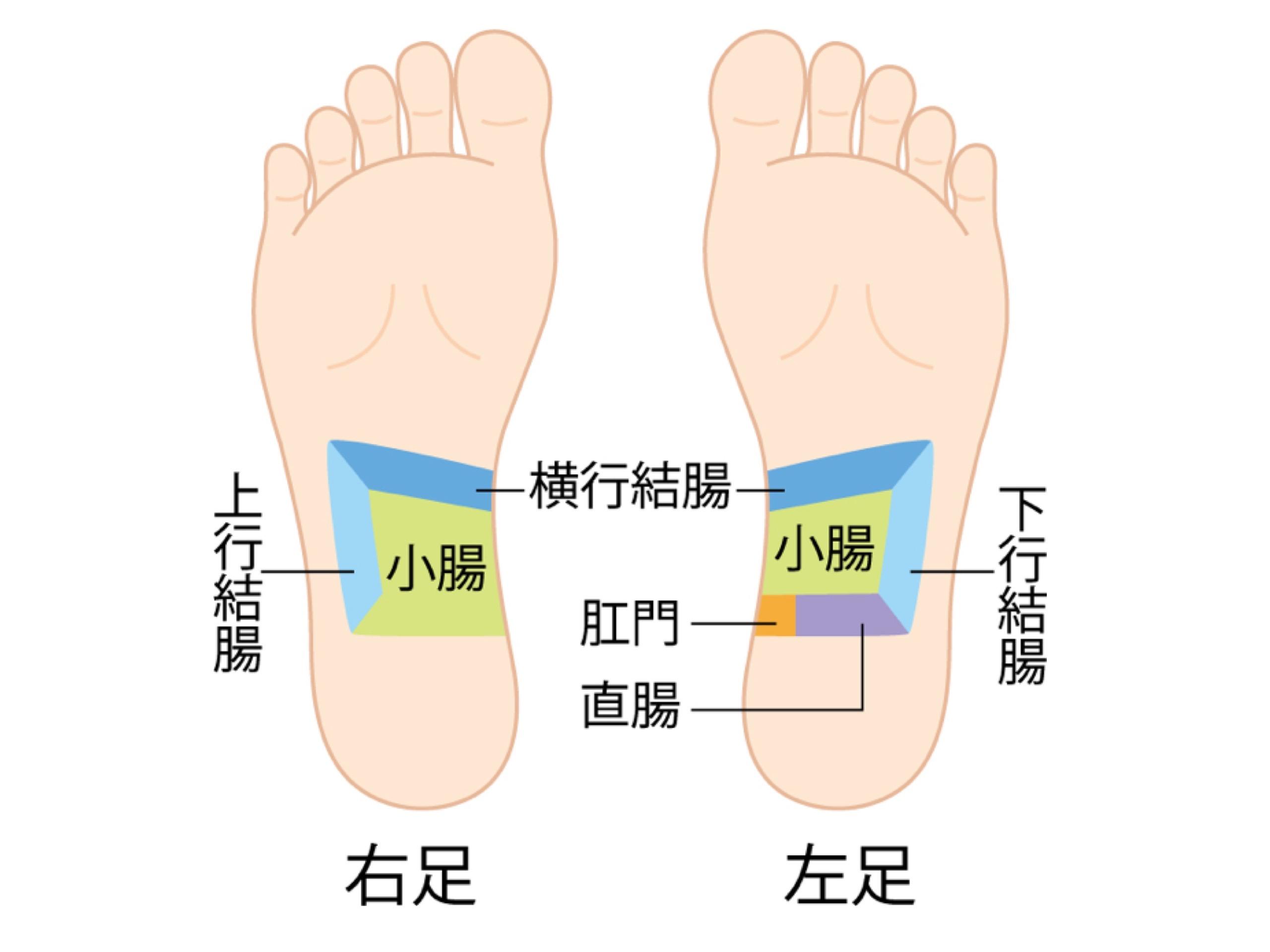小腸と大腸の反射区